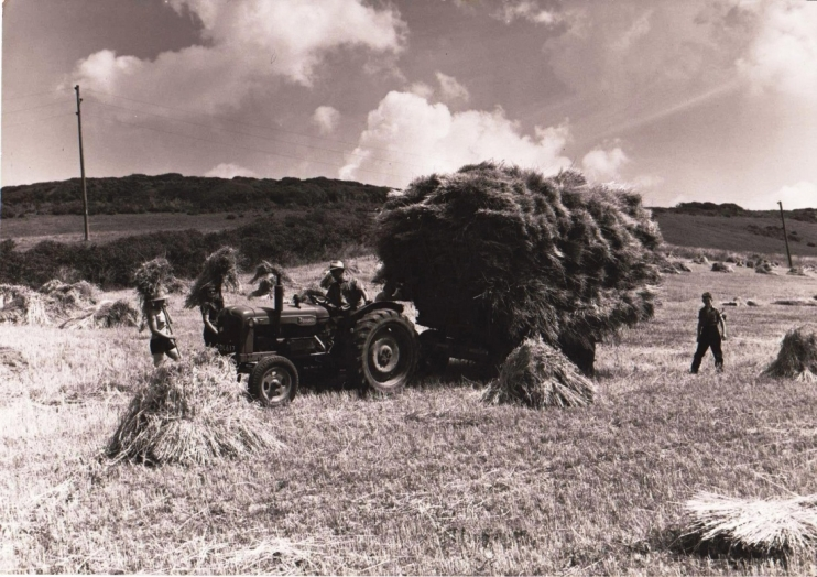 Haymaking Isle of Wight circa 1960