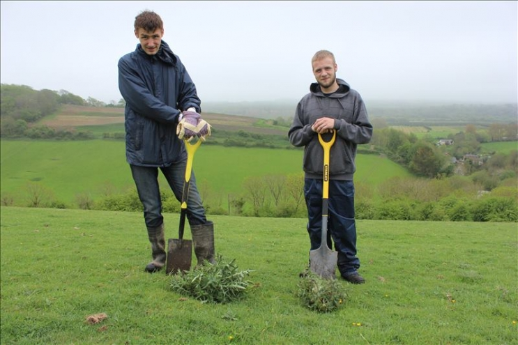 Green Army volunteers digging Spear Thistle on Arreton Down