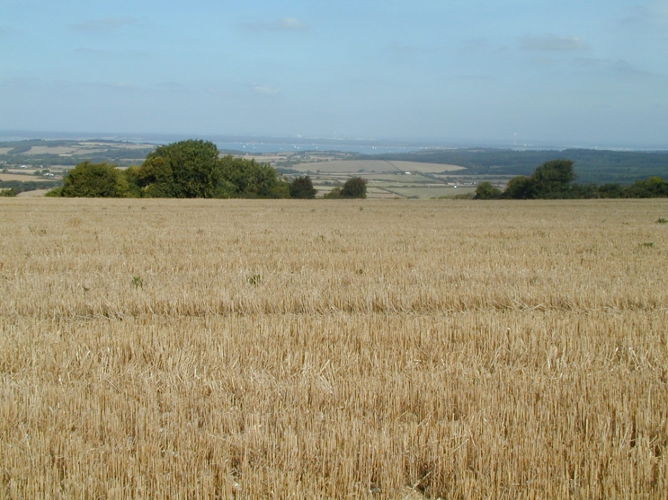 Wheat Stubble in field, Isle of Wight