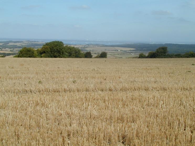 Wheat Stubble in field, Isle of Wight